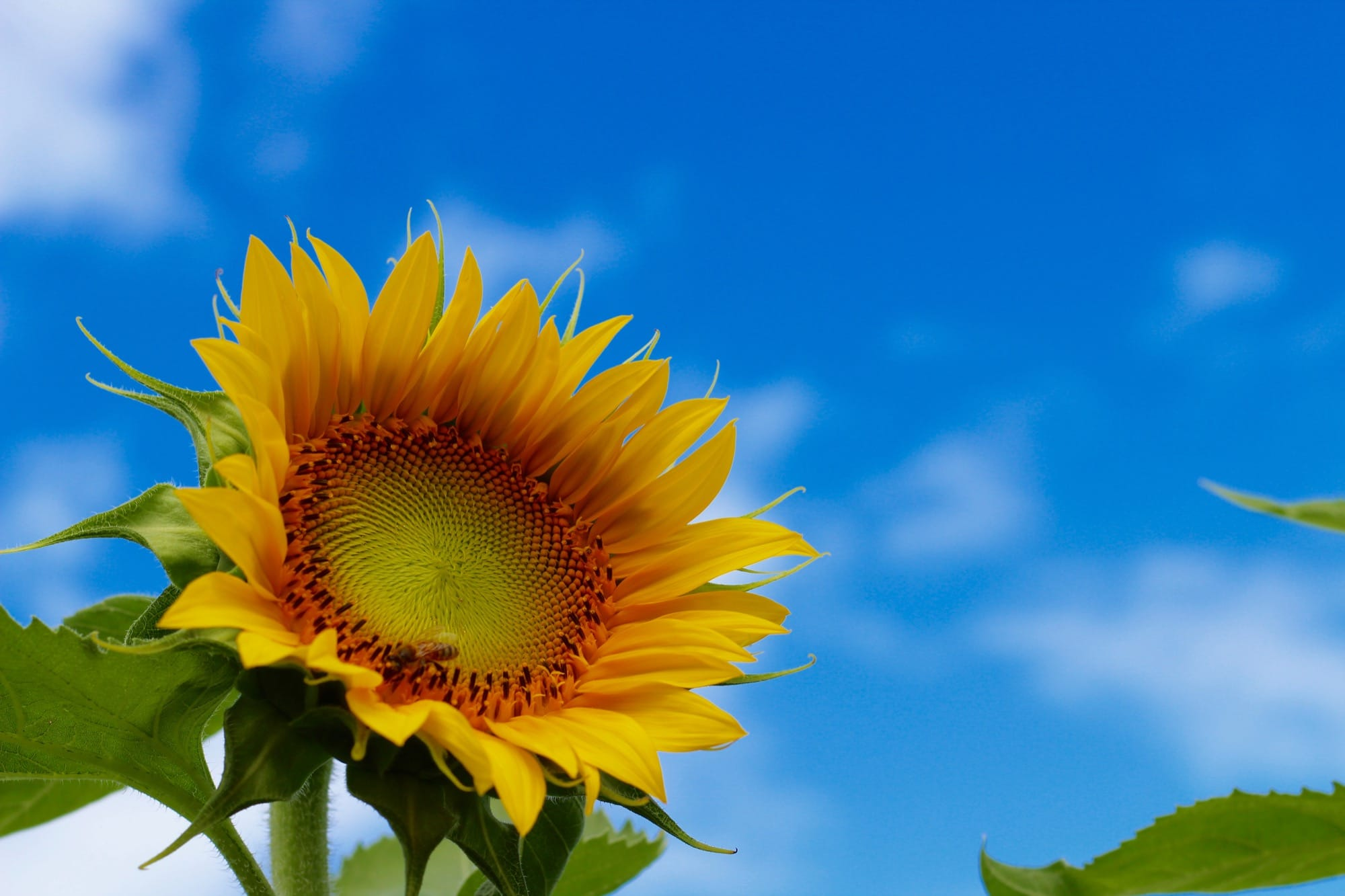 Sustainable Blog - Sunny and Blue, Your Sustainable Online Store
